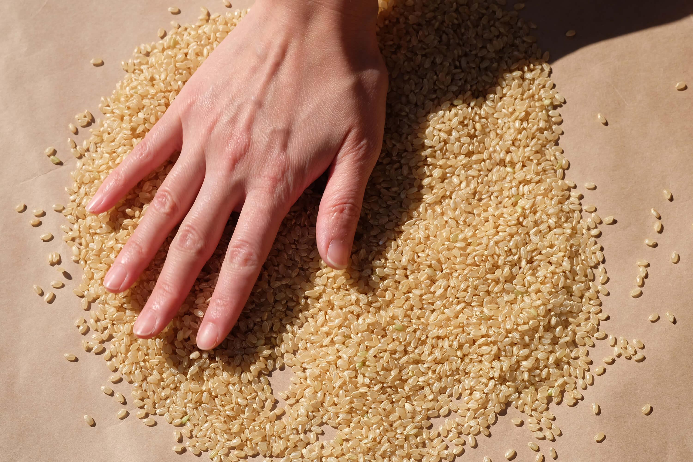 【わたしの暮らし時間】使いかけのお米どうしていますか?暖かくなる前に美味しく保管しましょう!