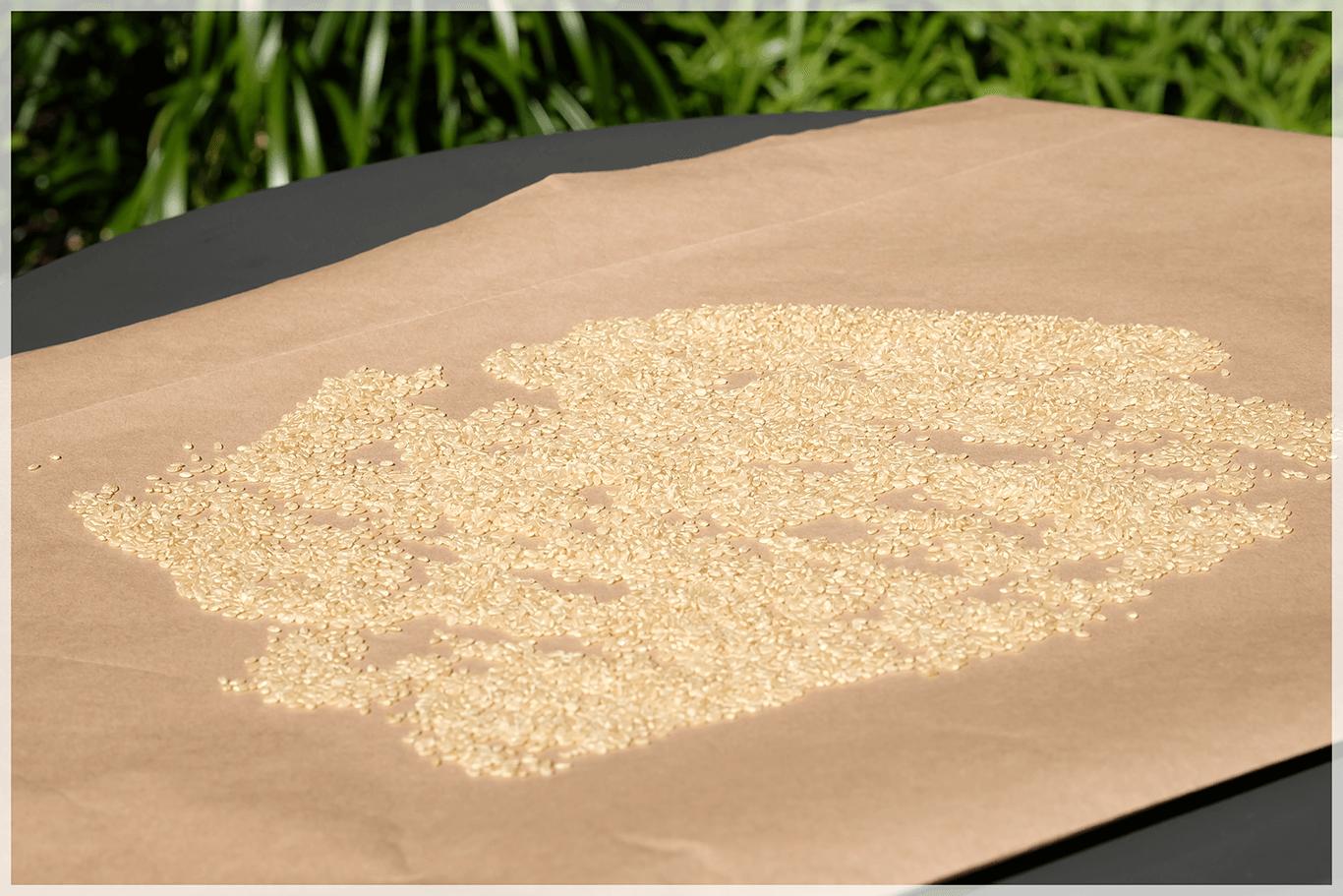 【ガーン、、😱】お米に虫がわいてしまったときの対処法編
