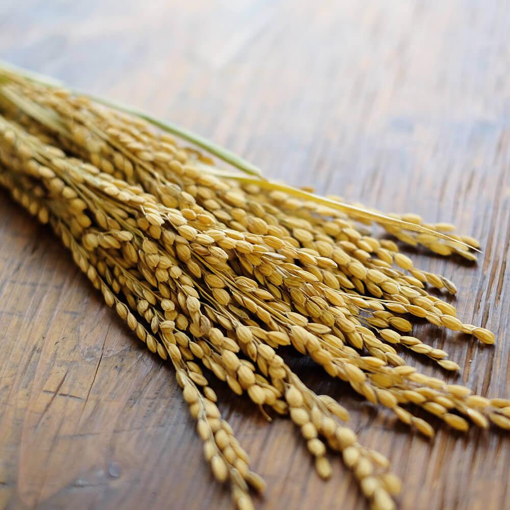 玄米は、宮城県産特別栽培米ひとめぼれを使用。