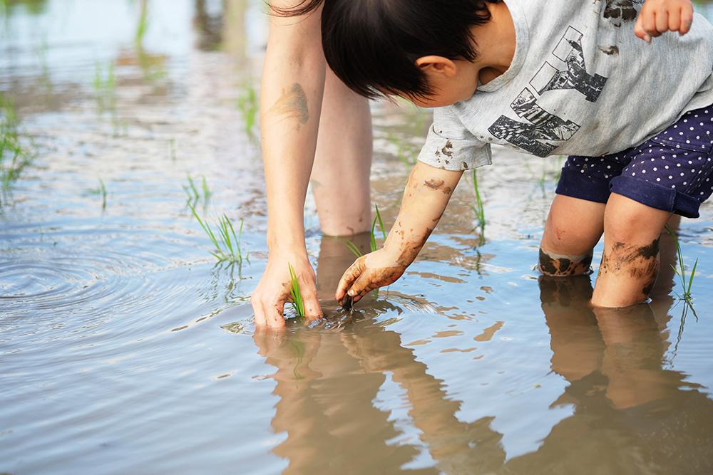 小さい子も一生懸命に苗を植えていきます。