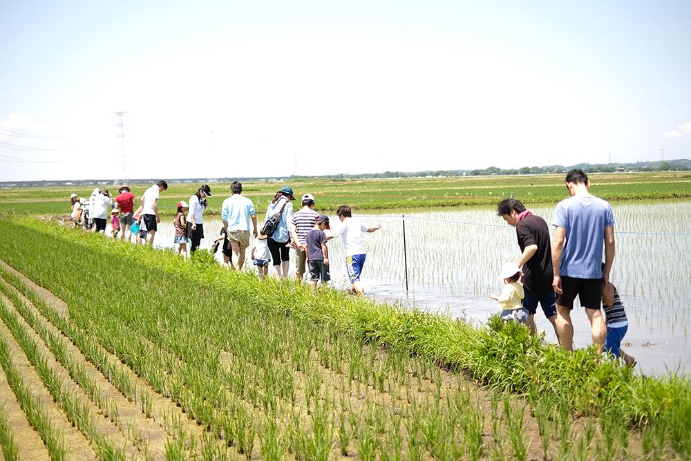 田んぼの一角に集まる参加者たち